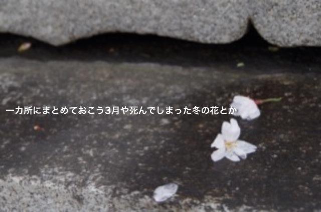 桜、さくら  小坂井大輔